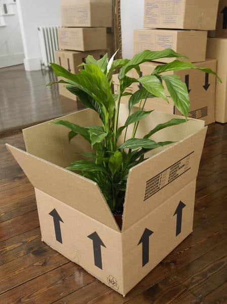 comment déménager des plantes - MyDemenageur conseils