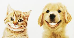 Avoir les dents blanches pour un beau sourire