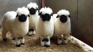 nettoyer une tâche de vin sur de la laine