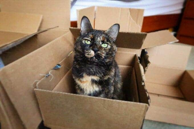 chat dans un boite en carton