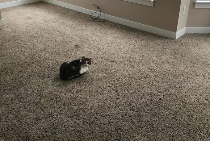 chat seul dans une pièce vide