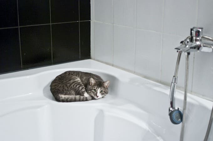 chat dans salle-de-bains